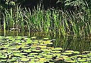 H t service gbr teichcenter fehrbellin naturerlebnis for Naturteich pflanzen